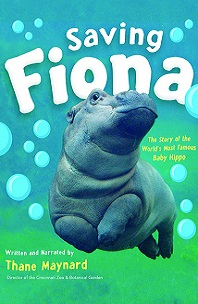 Saving Fiona; baby hippo swimming in water